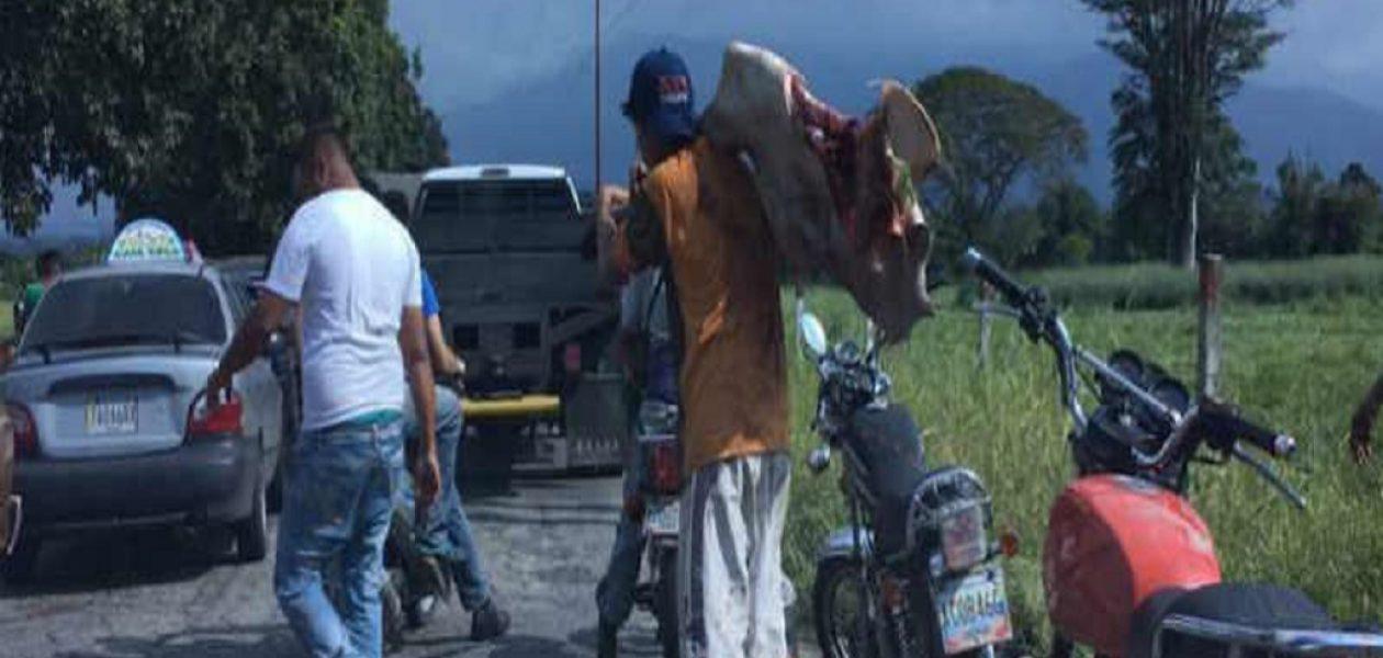 Entraron a saquear en hacienda de Mérida para sacrificar las reses (VIDEO)