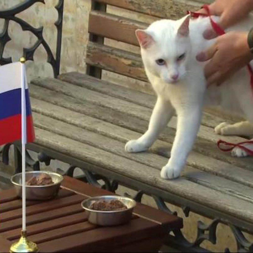 El gato Aquiles será el pronosticador del Mundial Rusia 2018