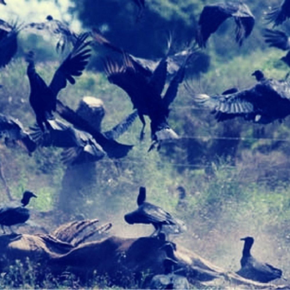 La MUD y el Gobierno: El baile de los zamuros