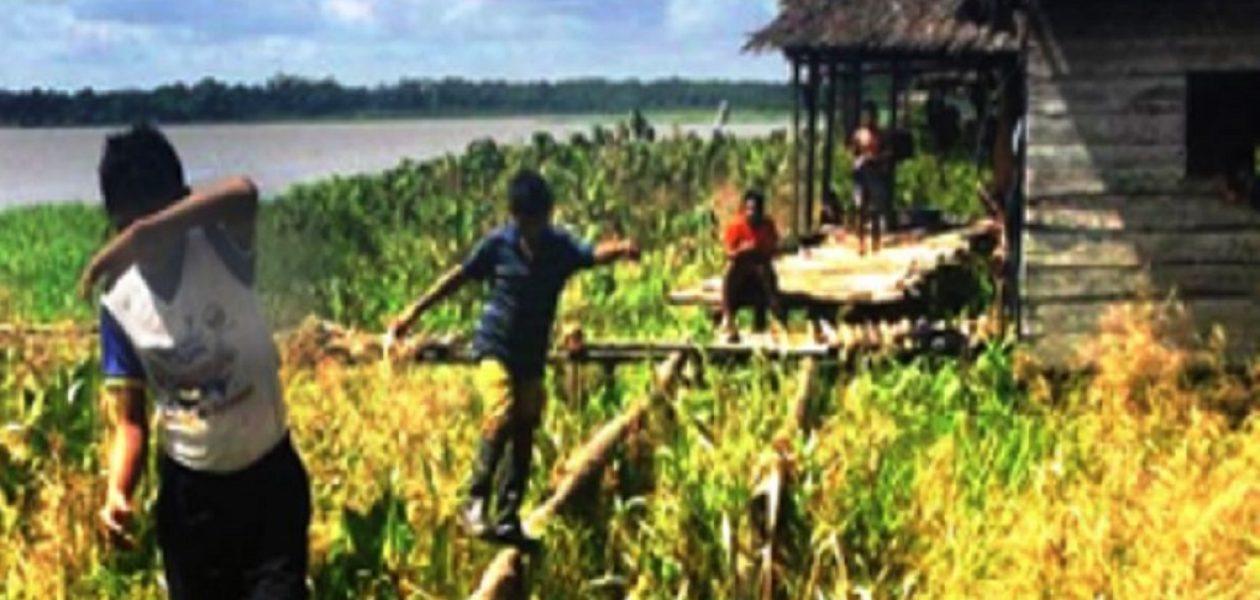 Incrementa la deserción escolar indígena en Amazonas