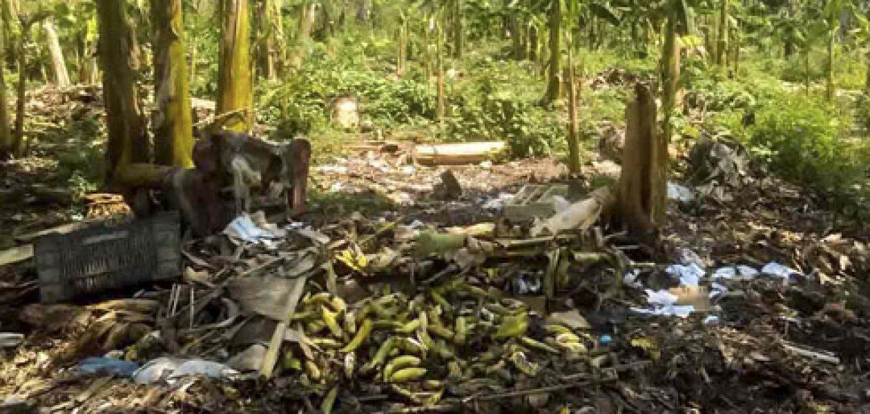 Escasez de alimentos: Zulianos se quedarán sin plátanos