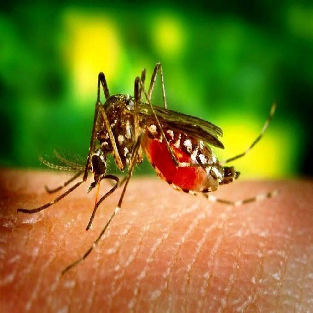 Venezuela lidera casos de malaria a nivel continental