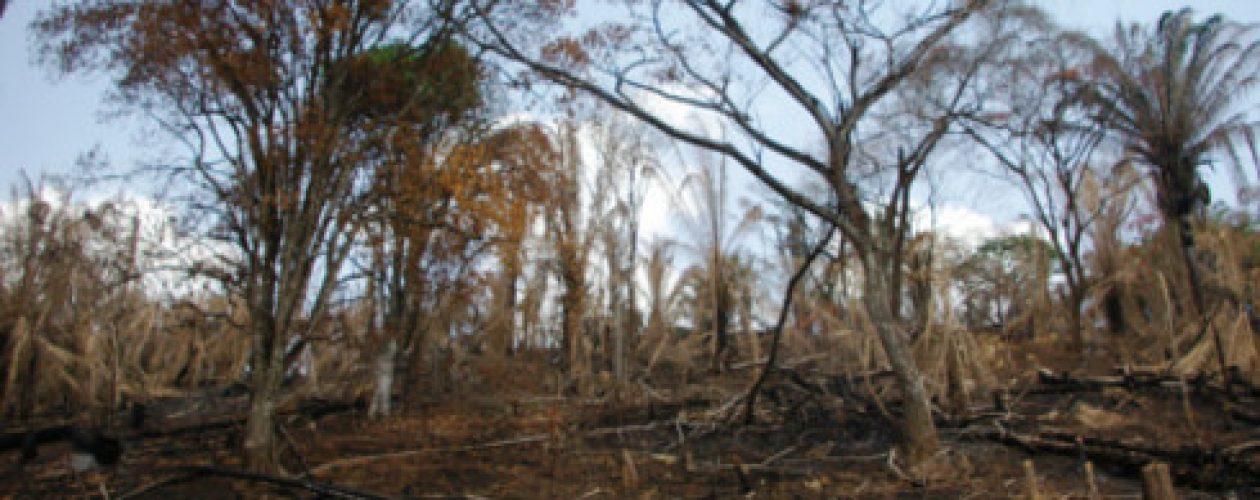 Tierras expropiadas por el gobierno están improductivas y abandonadas