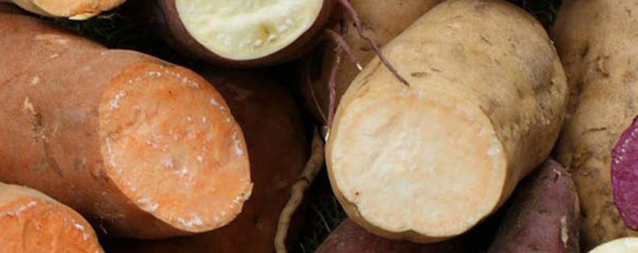 Un niño de 4 años murió al consumir yuca amarga en Anzoátegui