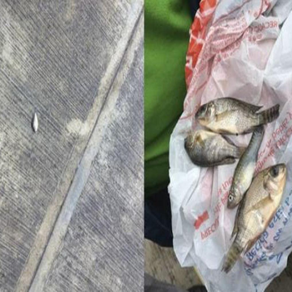Lluvia de peces al norte de México